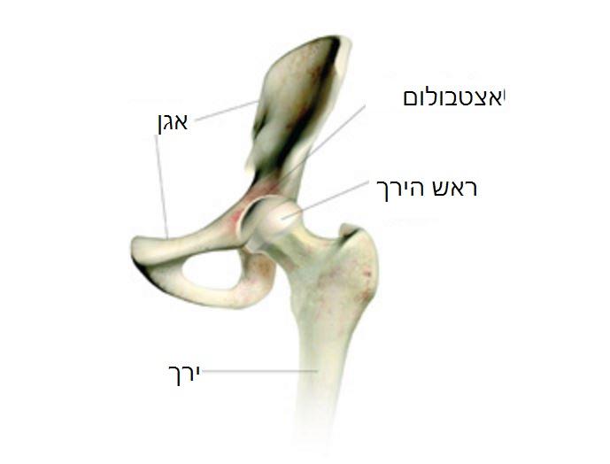 ניתוחי החלפת מפרק ירך - הסבר